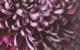 thumbnail_flowerbook
